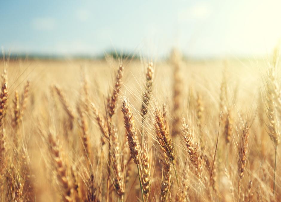 Ruth—Creating a Future, Renewing Faith